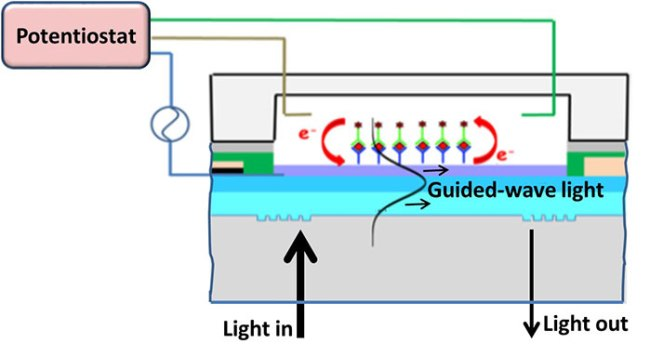 Influenza virus immunosensor with an electro-active optical waveguide under potential modulation- Advances in Engineering