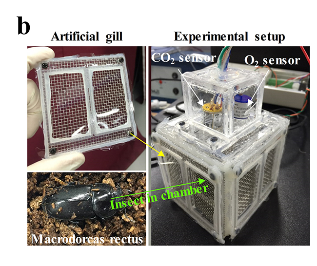 Theoretical model and experimental validation for underwater oxygen extraction for realizing artificial grills - Advances in Engineering