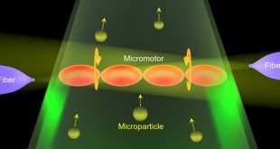 Living Biosensor and Micromotor in vivo - Advances in Engineering