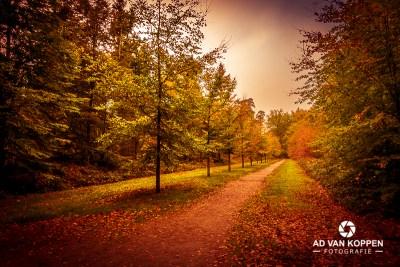 Landschapsfoto van herfstkleuren langs het fietspad in het loofbos van het Mastbos in Breda.