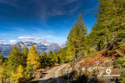 Landschapsfoto van een bergpad het bos in. Herfstkleuren bij Ginals in Wallis in Zwitserland. Bergen op de achtergrond.