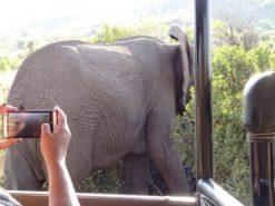 CU-JaVonne-shoots elephant