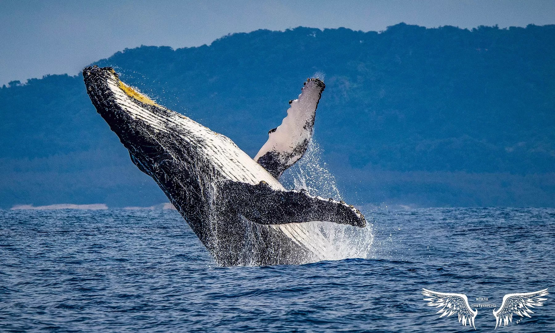Whale Watching St Lucia