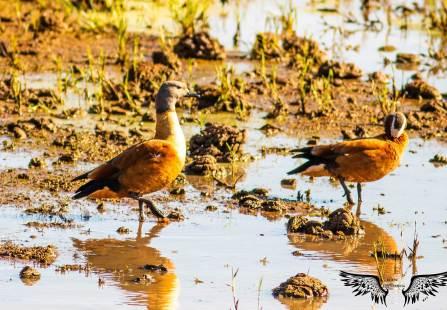 Ducks on the estuary