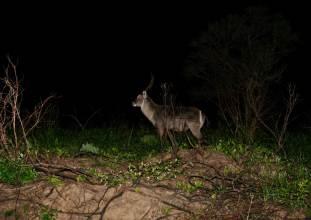 Buck in spotlight