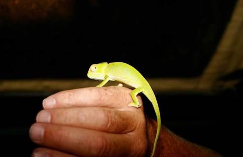 Chameleon colors