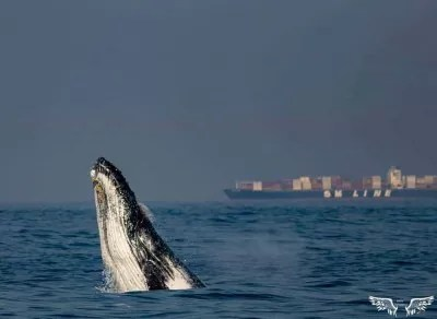 Whale and Dolphin Watching Richards Bay