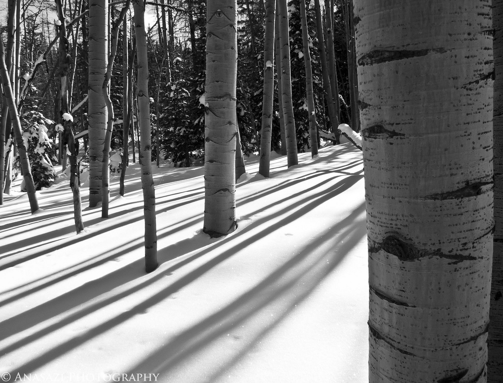 Snowshoeing the West Bench Trail