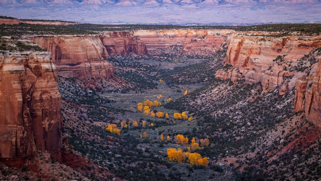 Ute Canyon Autumn