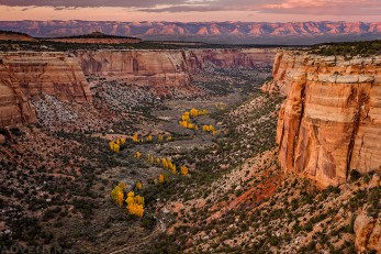 Fall In Ute Canyon
