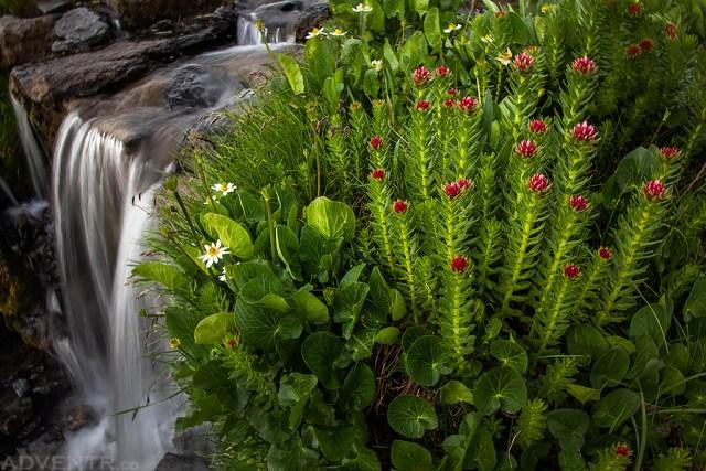 Flowers & Falls