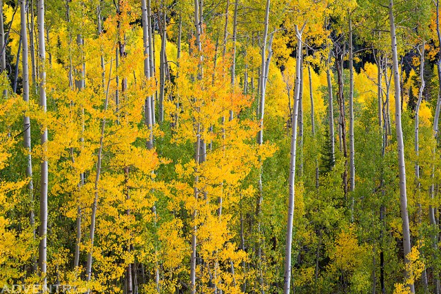 Grand Mesa Colors