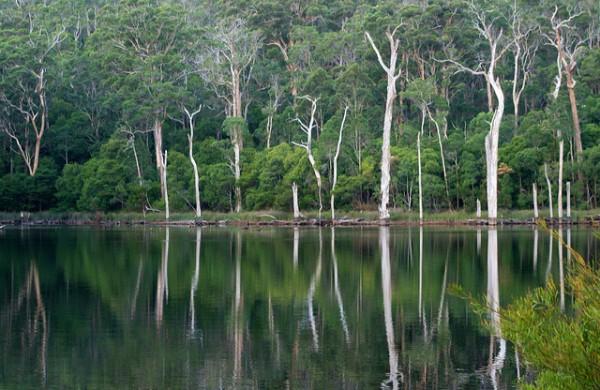 Walking tours in Australia - Karri Trees Australia