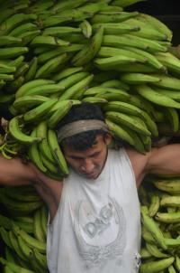 Man carry bananas on his back