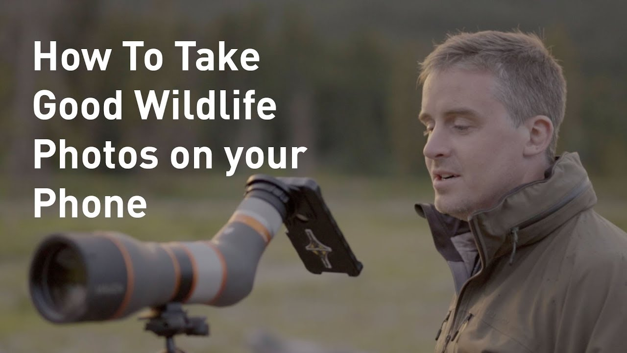 Video: How to Get Good Wildlife Photos with Your Smartphone
