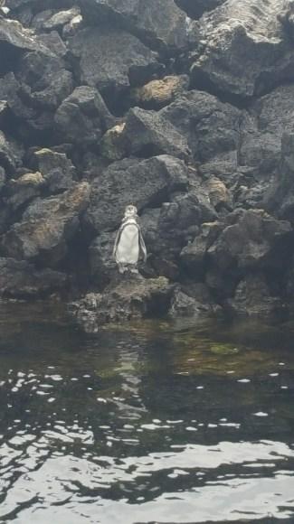 A little penguin!