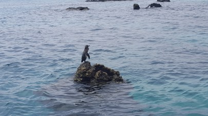 The lonely penguin!