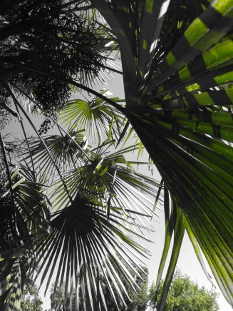 Palms everywhere, more dangerous than you would think!