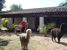 Two alpacas, a front garden beach and Rob & Charlie!