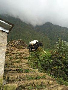 Sites along the Trail to Phakding - Yak Hybrid