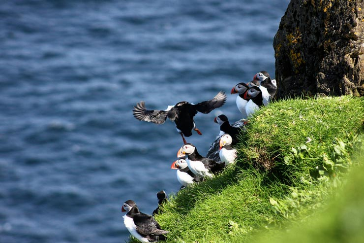 Faroe Islands Sailing Adventure Recap - Part 4 - Puffins!