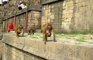Swayambhunath aka Monkey Temple in Kathmandu