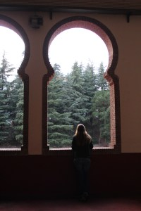 Admiring the trees