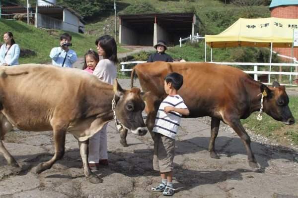 牛にびっくり写真