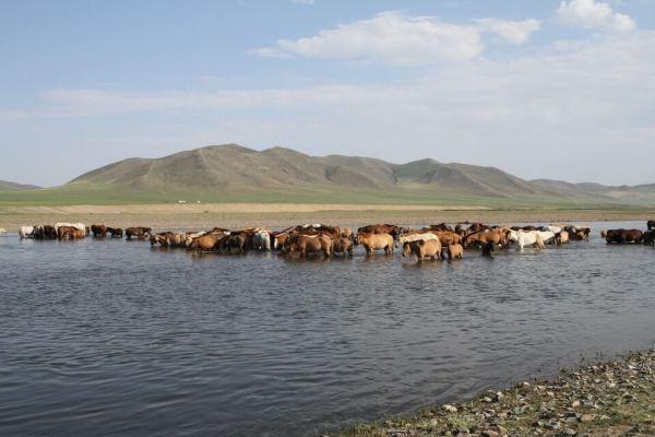 ヘルレン川にいる馬の写真