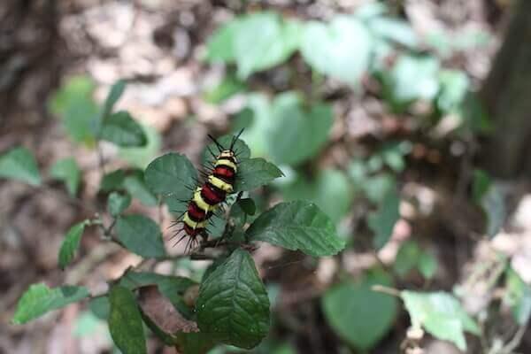 毛虫の写真