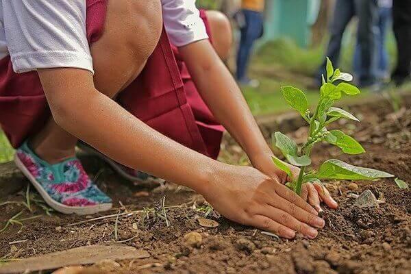 苗を植えている写真