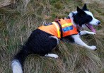 Search and Rescue Dog Tess