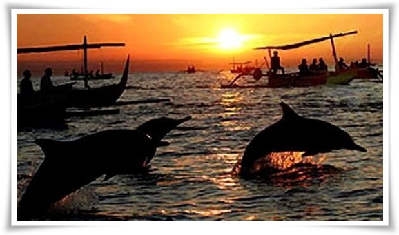 Dolphin-watching-tour-898x3681