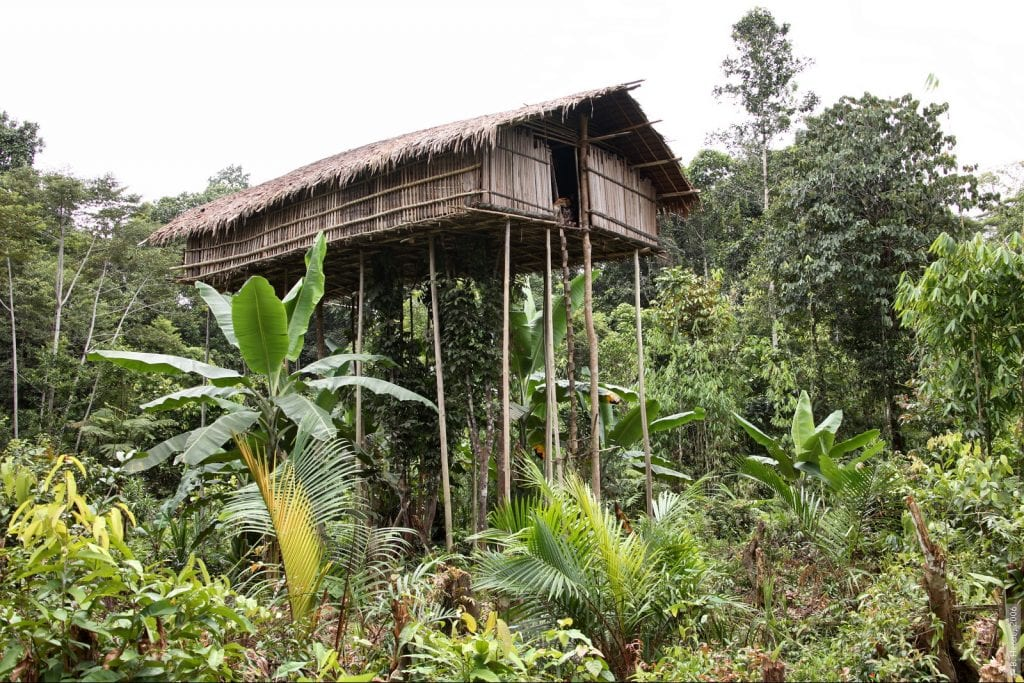 A Day In The Life Of The Korowai Tribe Papua I Adventure Indonesia