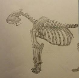 Lion Skeleton, Pencil, 17 July 2009