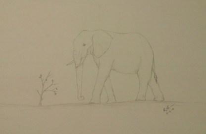 Elephant Sketch, Pencil, 13 December 2015