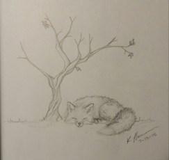 Sleeping Fox, Pencil on Paper, 10 July 2015