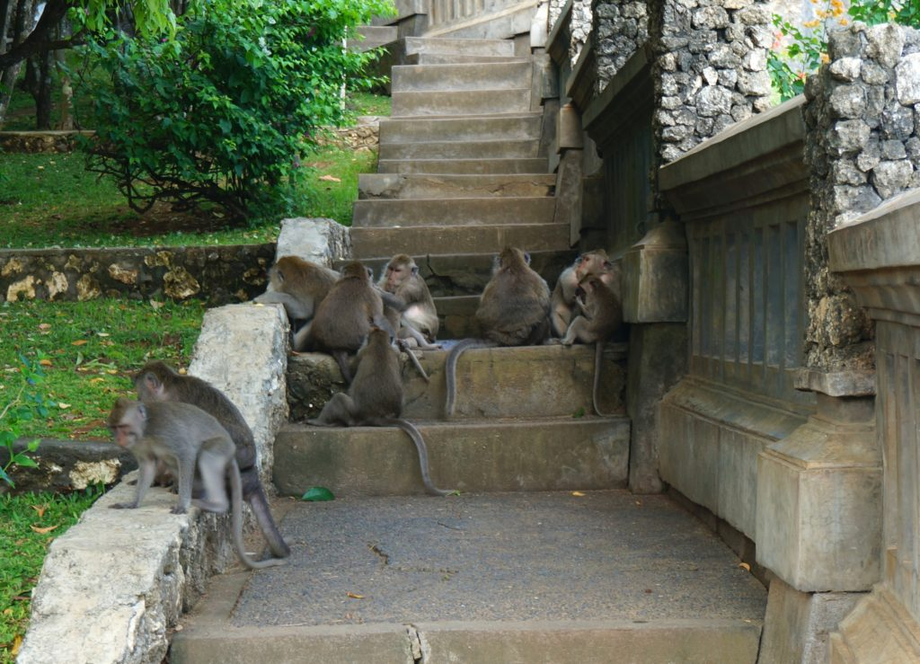Monkey's blocking the path at Uluwatu Temple, Bali.