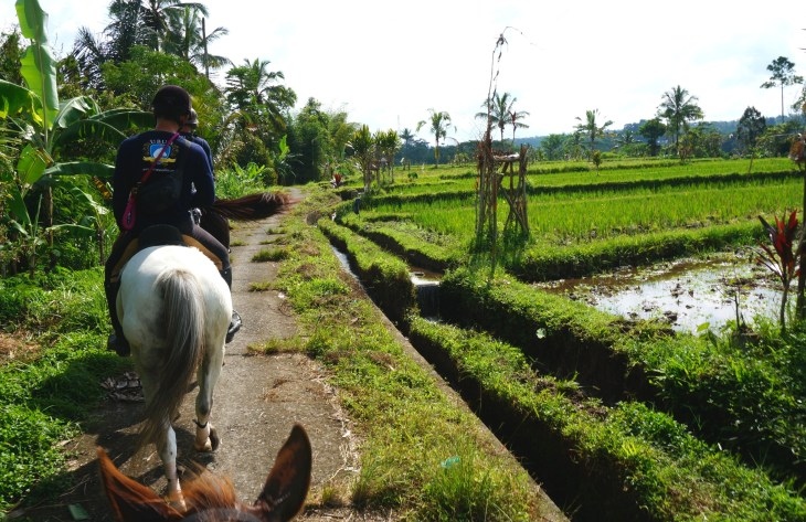 Riding by rice fields.