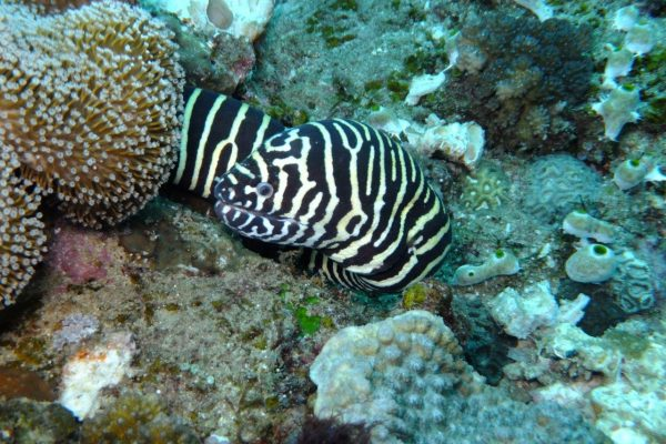 please, watch out for the finnestrians- (Zebra Moray)