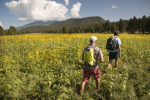 Joseph Landavaso, Jason Hasenbank hiking in the sunflowers with San Francisco Peaks in the background.