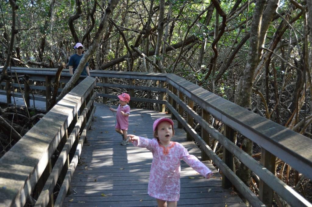 The boardwalk through the Mahogany Hammock.
