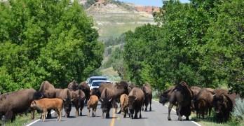 Exploring Theodore Roosevelt National Park, North Dakota