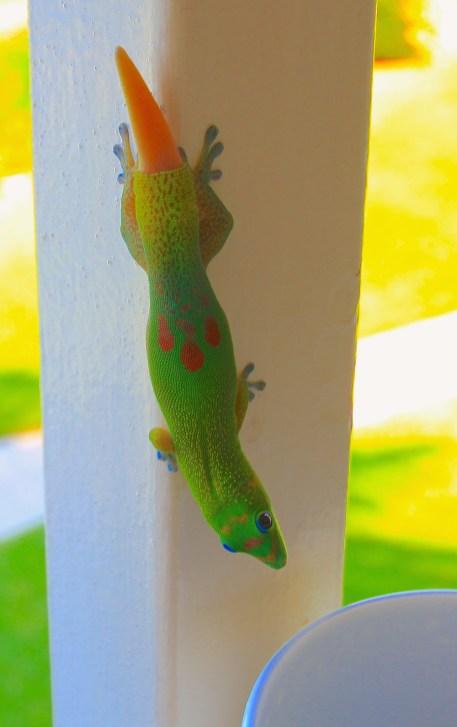 Unser Haus-Gecko