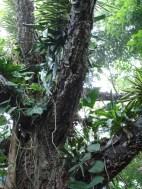 The tropical rainforest exhibit