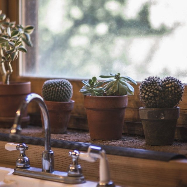 cactus, kitchen, design