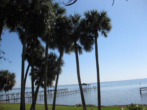 A group of palm trees in front of the blue ocean and clear sky.