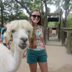 A girl posing with a smiling shaved alpaca.