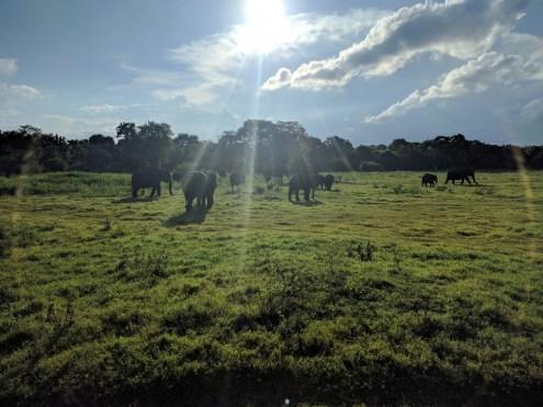 Prachtige weersomstandigheden hier. Voor het eerst in 2 maand eens niet te warm, en een heerlijk briesje. En olifanten. Veel.