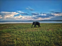 Cloud porn en olifant